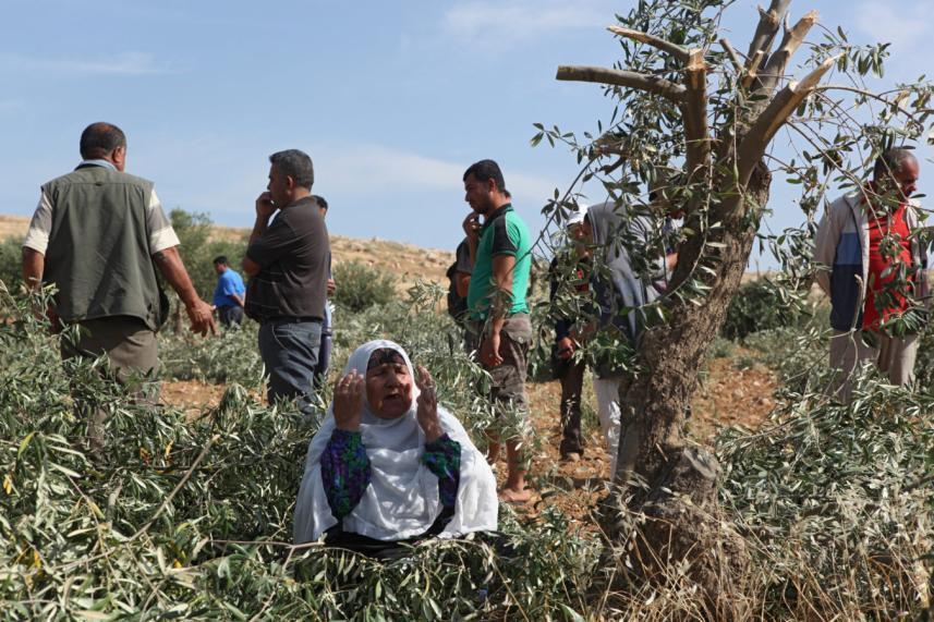 مستوطنون يقطعون 550 شجرة